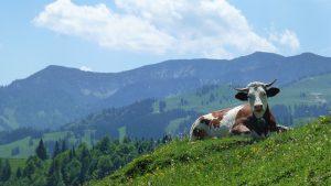 Arzmoos Almen im Sudelfeldgebiet